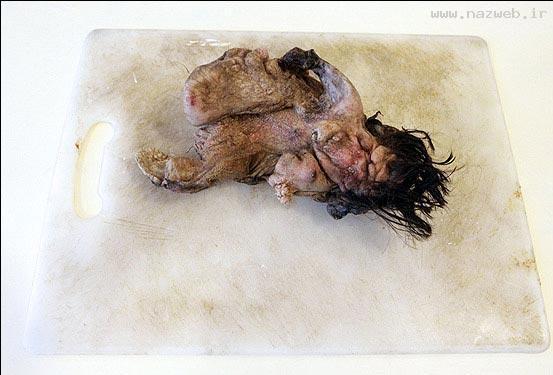 عکس های چندش آور جنینی در شکم یک پسر (16+)