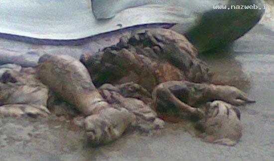 پیدا شدن دست و پای انسان در شکم یک کوسه! 18+