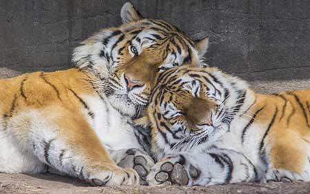عکسهای جالب,باغ وحش ,عکسهای جذاب