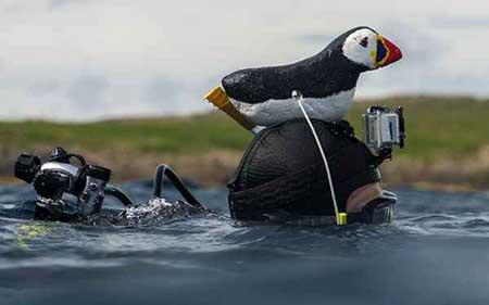 عکسهای جذاب,موجودات دریایی,تصاویر جالب