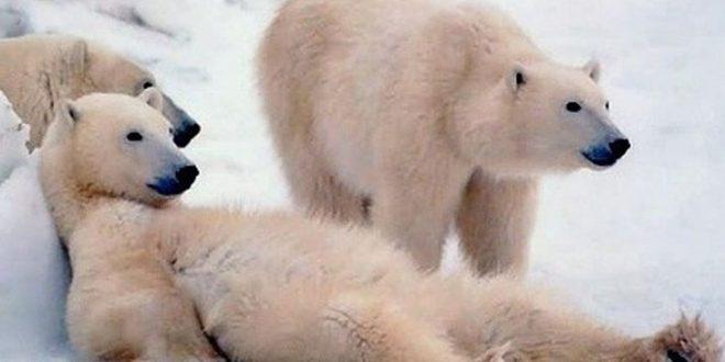 عکس های جفت گیری حیوانات