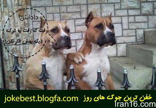 عکس_های_جالب_خنده_دار (4)