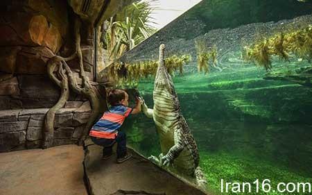 تصاویر دیدنی,تصاویر جالب,باغ وحش
