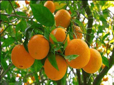 هفت میوه برای محکم کردن پوست