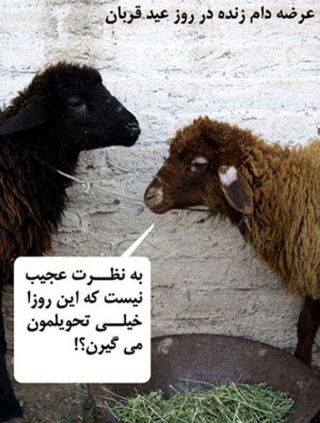 کاریکاتور عید قربان, طنز عید قربان