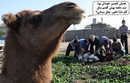 مطالب طنز و خنده دار, طنز عید قربان