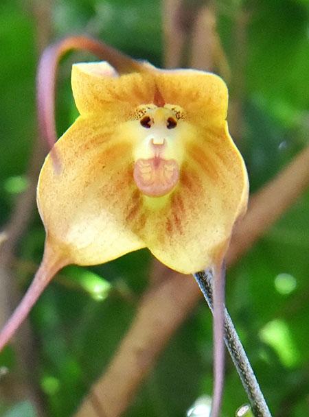 عکسهای جالب,عکسهای جذاب,ارکیده میمون