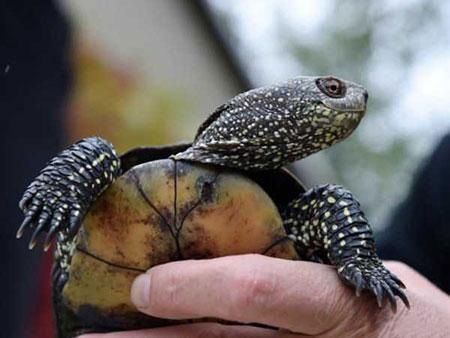 عکسهای جالب,عکسهای جذاب,لاکپشت