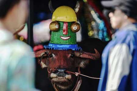 تصاویر دیدنی,تصاویر جالب,جشنواره مسابقات بوفالو