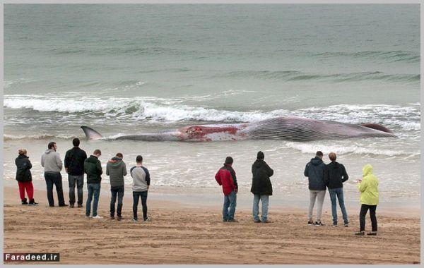 عکس،وال،نهنگ غول پیکر
