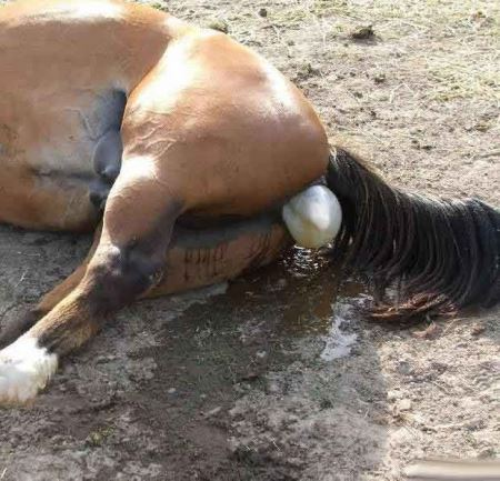 مراحل دیدنی زایمان طبیعی یک اسب (16+)