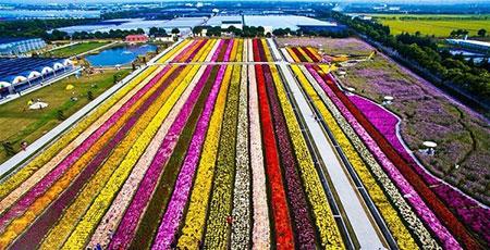 عکسهای جذاب,تصاویر دیدنی,مزرعه گل