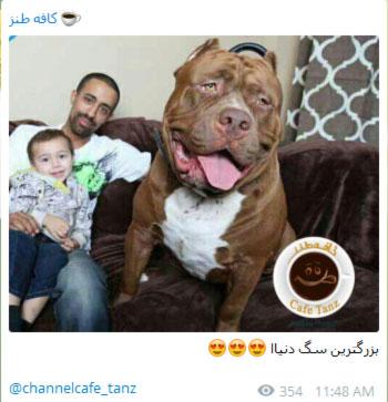 عکس نوشته های جالب, جوک های خنده دار, مطالب طنز تلگرام