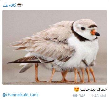 مطالب طنز و خنده دار در تلگرام, جوک های خنده دار در تلگرام,مطالب طنز تلگرام