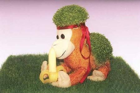 آموزش مدل سبزه میمون