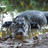 خطرناک ترین جانوران دنیا در جنگل آمازون