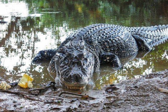 خطرناک ترین جانوران دنیا در جنگل های آمازون
