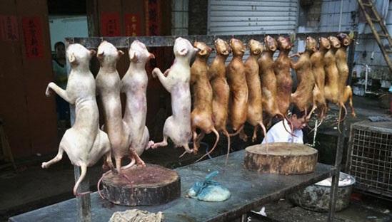 دوهزار کیلو گوشت سگ تبدیل به سوسیس شد؟+تصاویر