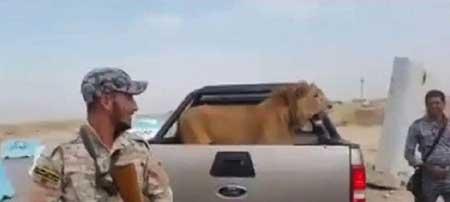 شکار خفن ارتش عراق در جنگ با داعش ! (تصویر)