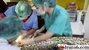 برداشتن با موفقیت تومور از قلب یک مار بزرگ