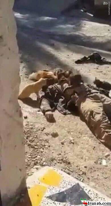 جنازه یک داعشی خوراک گربهها شد+عکس