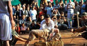 گردن زدن حیوانات ، داعش ، جشنواره داشین ، نپال
