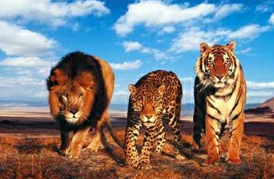دانلود مستند حیوانات دوبله فارسی
