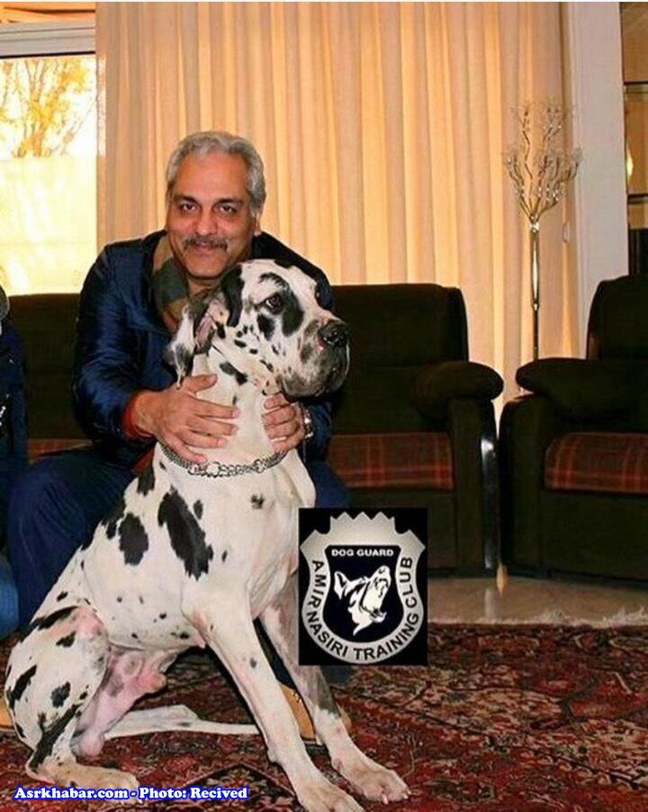 مهران مدیری و سگ عظیم الجثه (عکس)