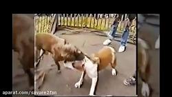 حمله حیوانات وحشی٬