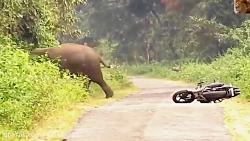 حمله حیوانات وحشی به انسانها