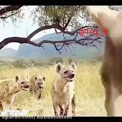 حیوانات درنده با حیوانات اهلی بغل هم
