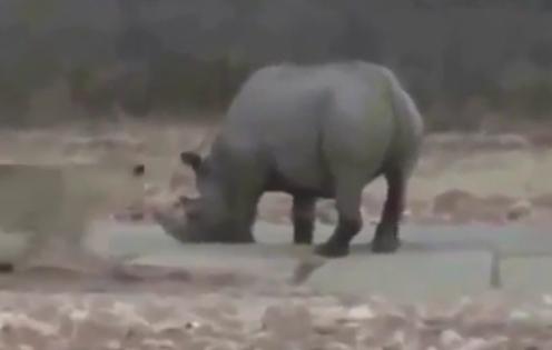 مستند خطرناک ترین حیوانات وحشی جهان