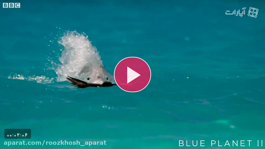 شکار پرنده در حال پرواز توسط ماهی غول آسا از داخل دریا