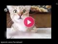 واکنشهای جالب یک گربه حین تماشای فیلمی ترسناک
