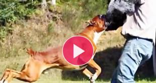وحشتناک ترین حملات حیوانات به انسان 15+/جالب و دیدنی
