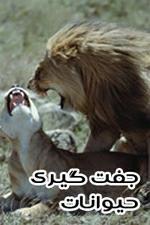 مستند حیات وحش – دانلود فیلم جفت گیری حیوانات