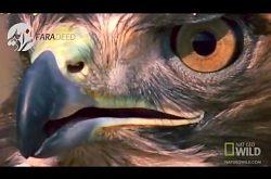 شکار مار توسط شاهین در بیابان های آریزونا