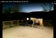 تفاوت جفت گیری حیوانات| جفت گیری حیوانات عجیب | جفتگیری خر و اسب