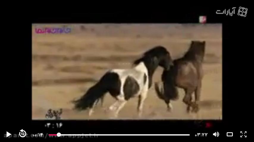 فصل جفت گیری در طبیعت اسبها (زیباست حتما ببینید)