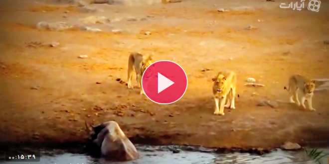 جالب ترین حمله حیوانات وحشی