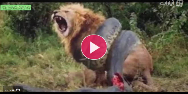 شگفت انگیز ترین حمله حیوانات وحشی