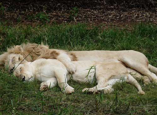عکس های خفن ابراز عشق در حیوانات