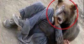 فیلم / ویدئویی از حملات حیوانات وحشی به انسان و نجاتشان
