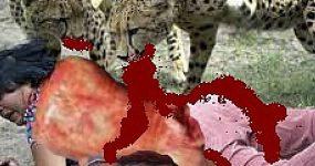 حمله دیوانه وار حیوانات وحشی به انسان