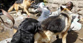 عکسهای حمله حیوانات وحشی به آدم