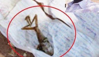 زنی که بچه قورباغه باردار شد +عکس