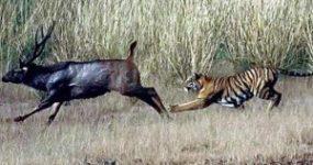 7 قدرتمند در آفریقا – مستند حیات وحش