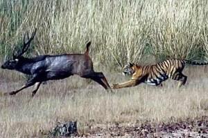 آفریقا حیات وحش