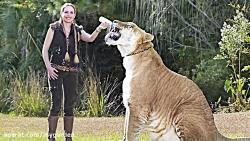 بزرگترین حیوانات در نوع خود