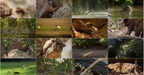 مستند حیات وحش فرانسه با دوبله فارسی